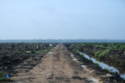 Für Palmöl gerodeter Regenwald, Quelle: flickr, © H Dragon