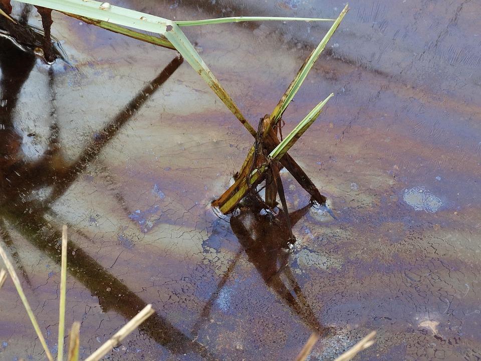 Mit Öl verschmutztes Wasser. |  Bild: © n.v.
